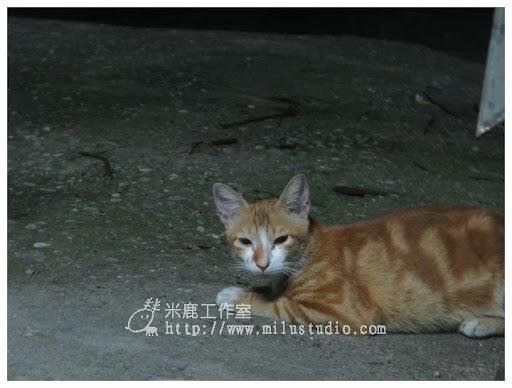 2010-cat01-10.jpg