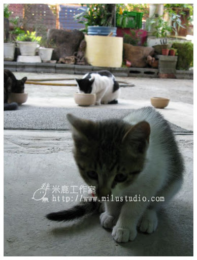 2010cat2401.jpg
