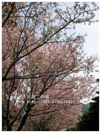 20110314flower41.jpg