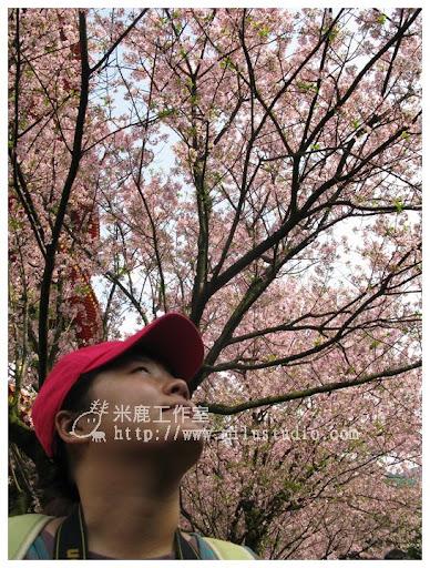 20110314flower42.jpg