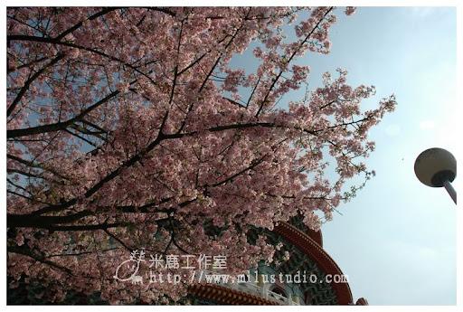 20110314flower30.jpg