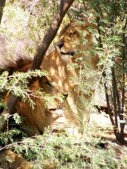 Zoo 16