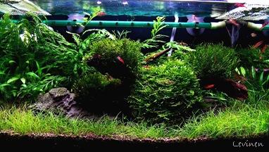 Moss Spot 2010.05.02. javított