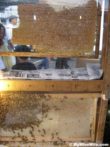 Wild honey from bee and its hive