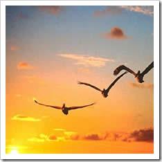 pajaros-aves-volando-cielo