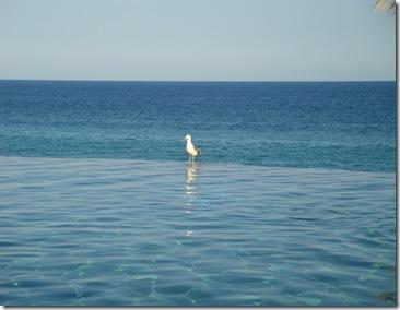 13.  Bird on pool edge