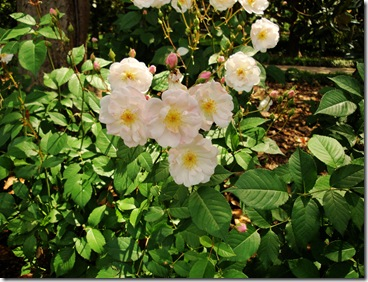 10.  White flowers