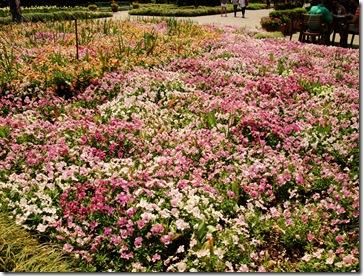 15.  Flower bed