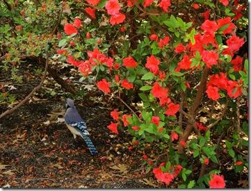 21.  Blue bird