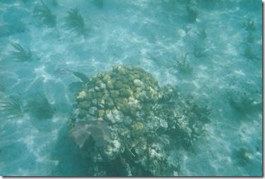 95.  Snorkeling