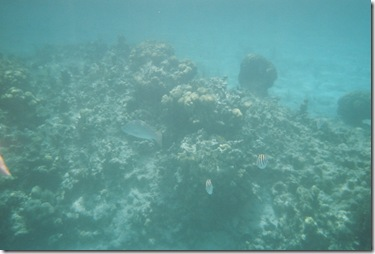 96.  Snorkeling