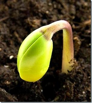 Veg seedling2
