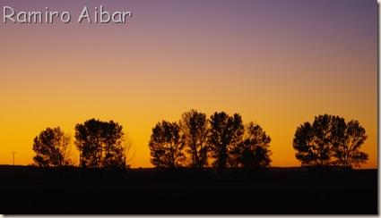 puesta de sol detras de arboles en gallocanta