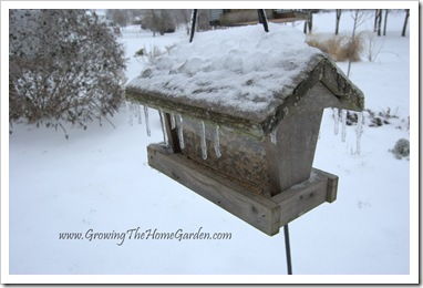 Birdfeeder encased in ice 1-2010-1