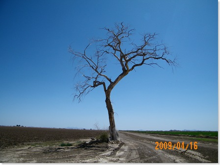 my favorite local dead tree in Pinal County, AZ