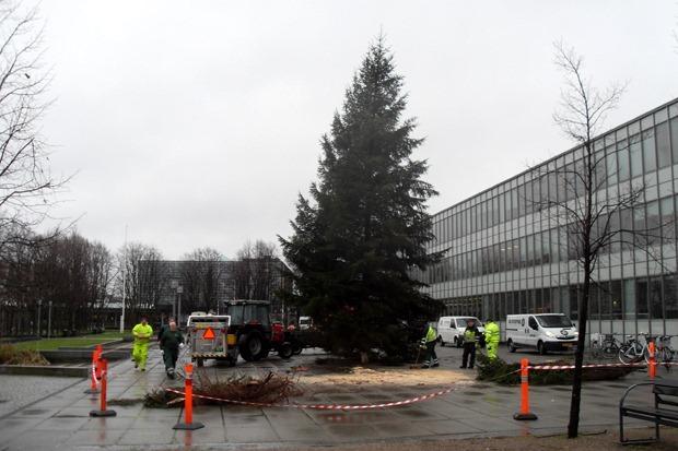 Juletræet rejses