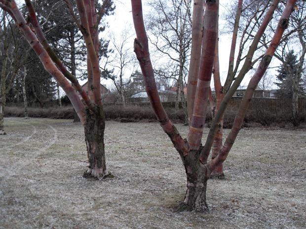patchworktræer