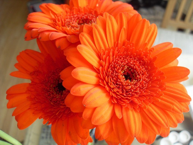 blomster på mit bord