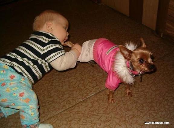 孩子和宠物 狗腿好吃吗?,婴儿,孩子,宠物,狗