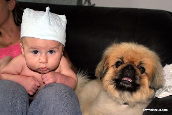 孩子和宠物 很像