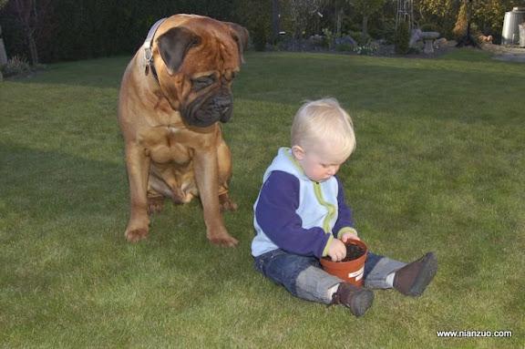 孩子和宠物 ,kastagnetr