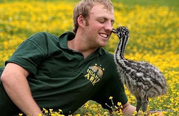 可爱的动物 又是没有记性的鸟!