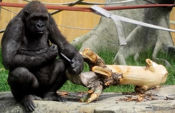可爱的动物 早就跟你说了用刀剔牙很难看。