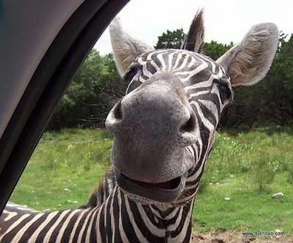 可爱的动物 热情!
