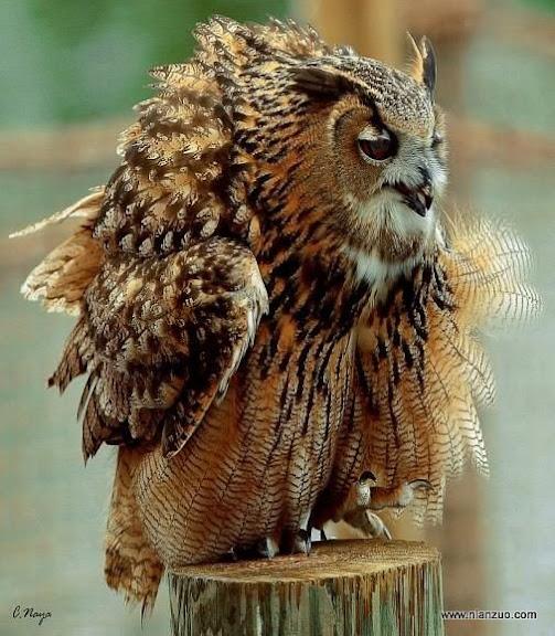 可爱的动物 毛有点难受