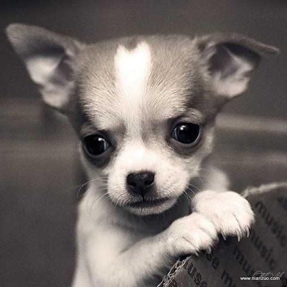 可爱的动物 可怜!