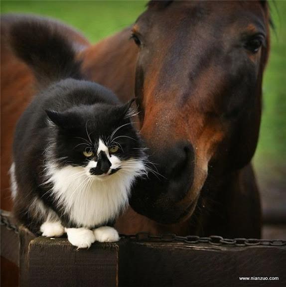 可爱的动物 我们也是好朋友!