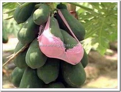 papaya with bra..