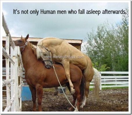 kuda-kawin-tidur