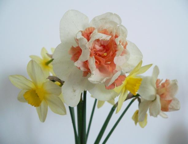 Narcisi1