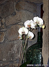 jarron orquidea