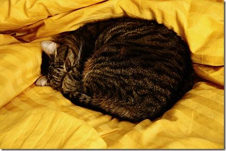 micia dorme2