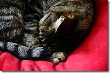 micia dorme3