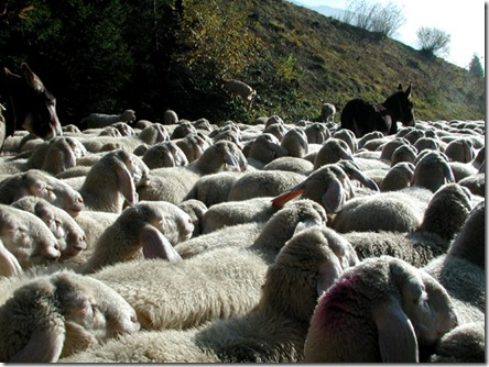pecoredischiena-vi