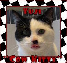yuji cow kitty