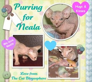 Neala-PurringForNeala-2010-06-29-300