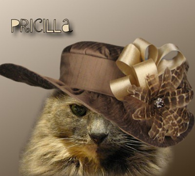 pricillahatting