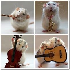 ratinhos_lindos