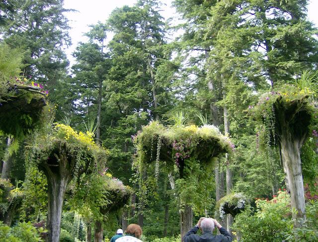 The Upside Forest of Mendenhall Gardens Juneau Alaska Atlas