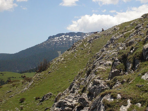 Corzos en Montenegro
