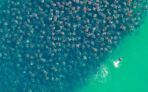 فضل صور الطبيعة التي فازت بجوائز مجلة ناشيونال جيوجرافيك لعام