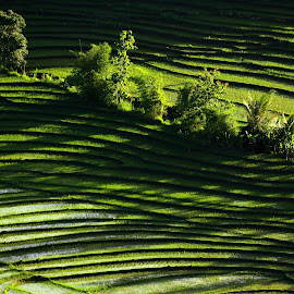 shadow by Kurnia Arif.N - Landscapes Caves & Formations ( curve, shadow, farmland, trees, landscape )