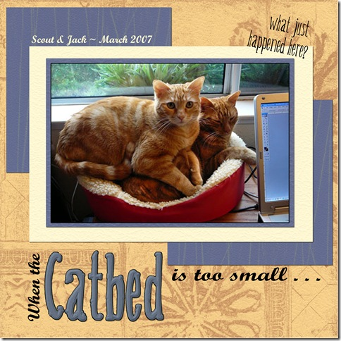 Catbed-too-small copy