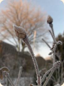 Vinterpynt