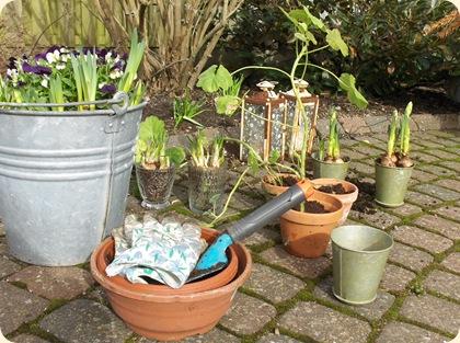 Forår i krukker og potter