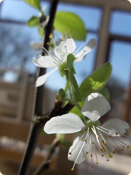 Blommegren